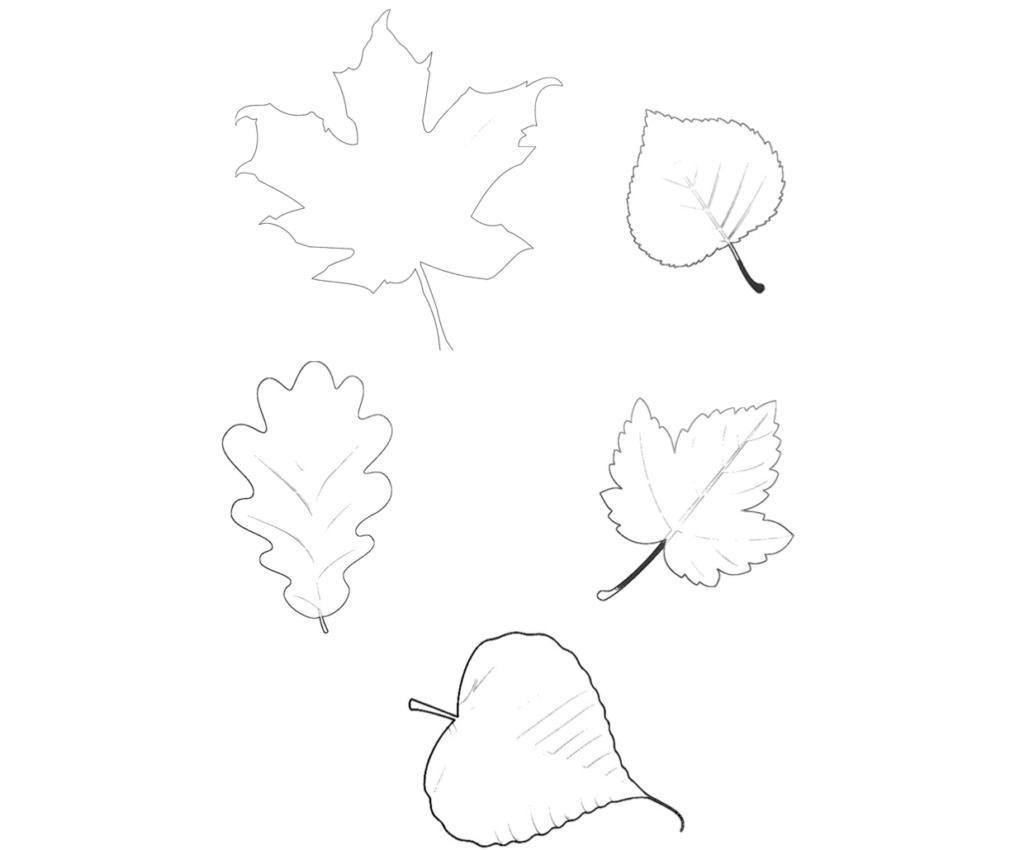 herbstblätter vorlage  ideal zum ausmalen und basteln