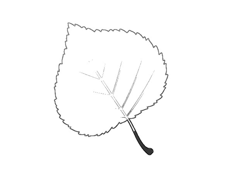 Herbstblatter Vorlage Ideal Zum Ausmalen 6